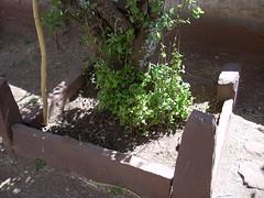 PATAZA ACORA PUNO (luchin LC) Tags: peru titicaca puno acora pataza