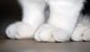 Paws (dachalan) Tags: feet cat paws oxfordshire claws binka longhanborough westoxfordshire hanborough dachalan abigfave nikond40x photofaceoffwinner pfogold pfoisland01