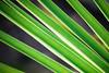 Green (dachalan) Tags: green home nature leaves garden leaf thumbsup oxfordshire longhanborough westoxfordshire hanborough dachalan nikond40x photofaceoffwinner pfogold