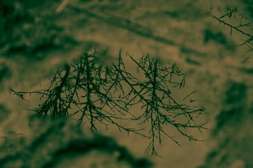 你拍攝的 20081116數位攝影_阿里山之旅139-6。