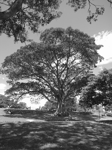 Botanic Gardens 22/11/2008
