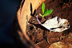 We Come..We Go... (SonOfJordan) Tags: light shadow plant blur colour green canon leaf amman jordan xsi 450d  samawi sonofjordan shadisamawi  wwwshadisamawicom
