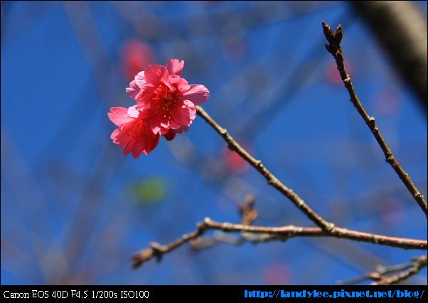 9711-新社花海:Date with Bee_054.jpg