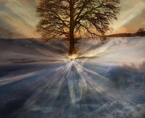 Tree of Truth, h.koppdelaney