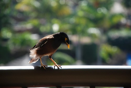 Balcony Bird
