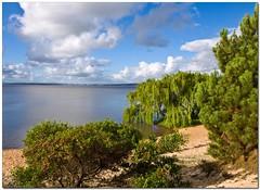 salice (Andrea Rapisarda) Tags: nature uruguay natura lagoon explore laguna maldonado salice explored bej mywinners rubyphotographer rapis60 andrearapisarda lesamisdupetitprince olimpuse510