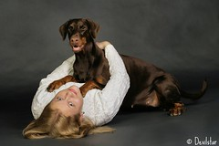 Marit with her Destiny (Devilstar) Tags: friends dog brown love girl studio dream hund destiny blonde doberman pinscher owner marit stuudio dobermann koer  halettah