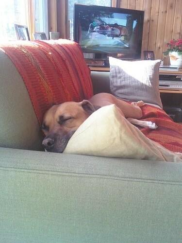 baxter sleeps