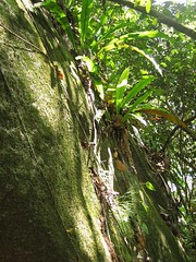 Seychelles1 (SeyEasy) Tags: vacances soleil seychelles ladigue praslin iles plages chambres mah ocanindien htels sjours seychelle bonsplans praslinseychelles maheseychelles voyagedenocesseychelles ladigueseychelles vacancesseychelles croisiereseychelles hotelseychelles bateauseychelles bonsplansseychelles locationseychelles seychellespascher promoseychelles sejourseychelles reservationseychelles reservationhotelseychelles giteseychelles vacancesseychellespascher