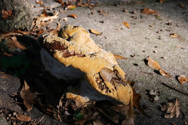 2009-10-07-mushroom2