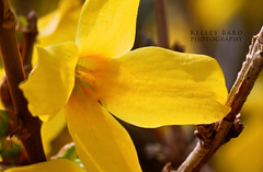 Yellow Flower HDR