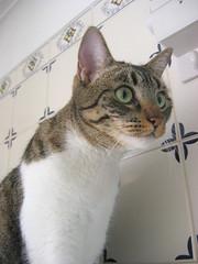 350-December'07 (Silvia Inacio) Tags: cats cat tabby gatos gata princesa kissablekat