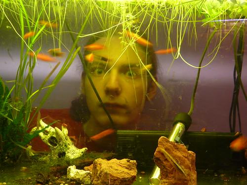 fish aquarium fry tank 365days
