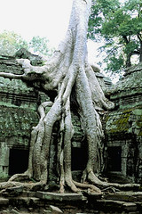 iPhone / iPod touch wallpaper - Ankor Wat Spung Tree (sklender) Tags: wallpaper iphone ipodtouch iphonewallpaper iphonebackground ipodtouchwallpaper ipodtouchbackground