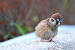 curiosity (NoiRcORNEr) Tags: birdie feather lookatme 70200 naturesfinest d80 14teleconverter picturefantastic creativewords