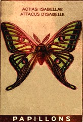 papill 9