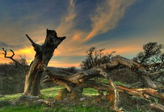 old and broken (Marc Crumpler (Ilikethenight)) Tags: california trees sunset usa green grass clouds canon landscape bravo searchthebest hiking trails hills bayarea eastbay distillery ebrpd roundvalley blueribbonwinner contracostacounty eastbayregionalparkdistrict tamron1750 sfchronicle96hours 40d abigfave ebparks superaplus aplusphoto flickrenvy canon40d betterthangood awardtree theselectbest jediphotographer ilikethenight marccrumpler ebparksok