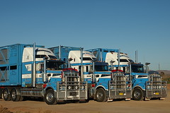 3 of Grimison's T904 Kenworth B/Double stock crates (Truckaus) Tags: trucks roadtrain kenworth australiantrucks