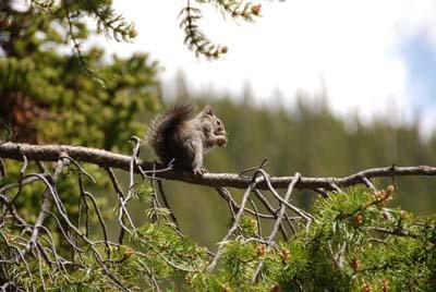 squirrel at bear lake