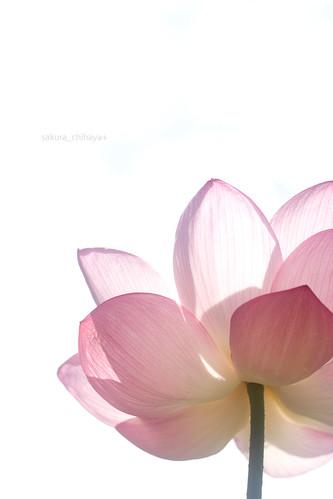 2510 : Lotus2008#5