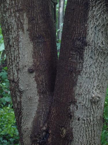 tree like a <span class=