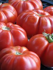 costoluto tomatoes