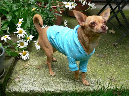 Birdie modelling her latest hoodie