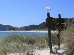 Isole Cies, Praia das Rodas