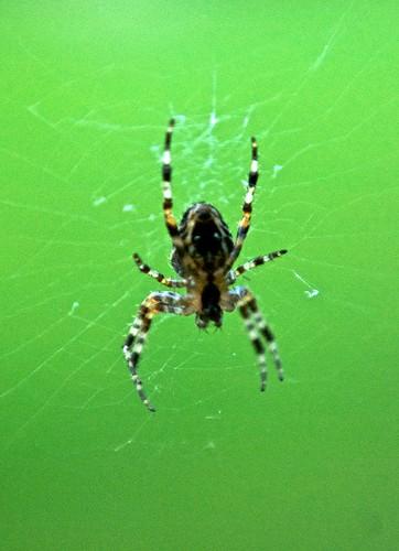 lensbaby spider