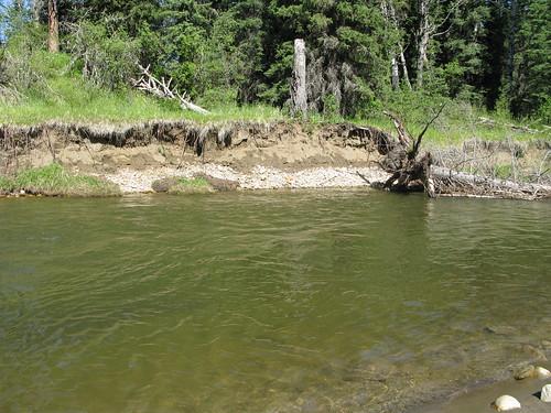 Alberta Trout stream