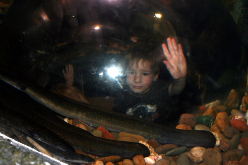 aquarium :: peeking chamber