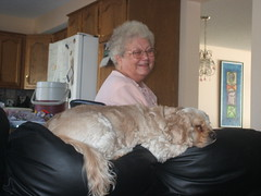 Two Of The Cutest Things In The World... (LostMyHeadache: Absolutely Free *) Tags: old pink grandma light boy dog pet house cute calgary love kitchen smile lady painting hair puppy fur relax nose happy amigo grey glasses sweater fridge eyes friend grandmother sweet room awesome relaxing adorable buddy best couch indoors lazy alberta grandparents aww spaniel inside doggy walls cocker pup refrigerator awww pal cockerspaniel 2008 pure loveable grandparent paneling greyhair bred davidsmith purebred oldlday panws lostmyheadache
