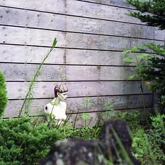 outside (F_blue) Tags: mannequin kodak hasselblad izu 500cm portra160nc  planart c8028 fblue2008