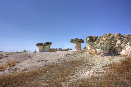 Каменни гъби