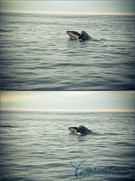 Humpback whales near our boat by ChristanP Photography