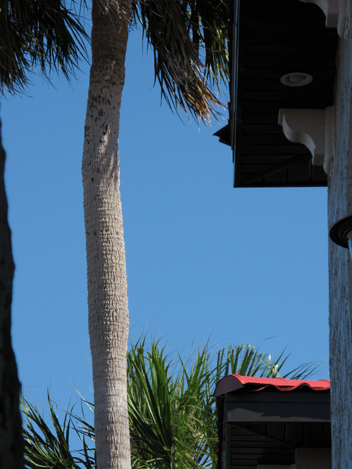 composition with palm tree, Weeki Wachee, Florida