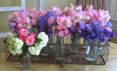 sweet peas on display (candy_rose) Tags: california city pink flower tree floral northerncalifornia rose metal garden mixed wire forsale basket purple sweet antique container sweetpea vase snowball bouquet sell pea gardener amador bouquets sweetpeas suttercreek