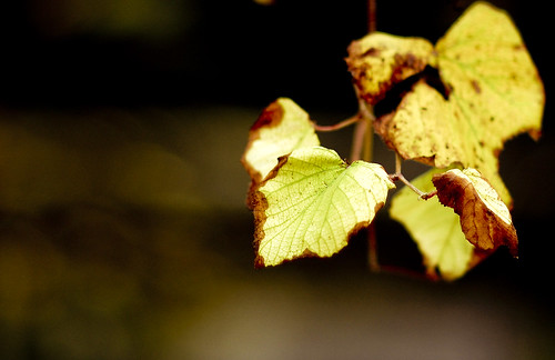 """""""Every leaf speaks bliss to me, fluttering from the autumn tree"""""""