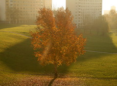 City Tree in Autumn Morning (johan.pipet) Tags: lighting city morning autumn sun color tree fall nature backlight canon eos gold europe slovensko slovakia palo bratislava bartos dubravka jese 400d abigfave saariysqualitypictures barto ringexcellence