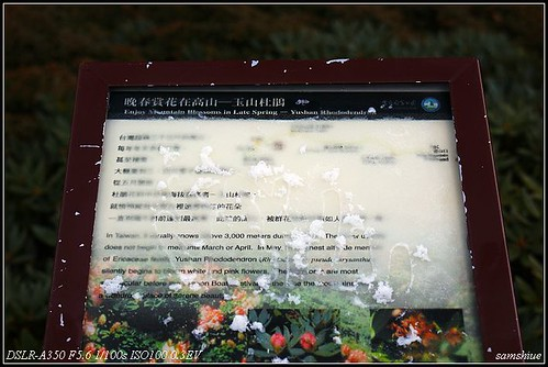 DSC06511_nEO_IMG