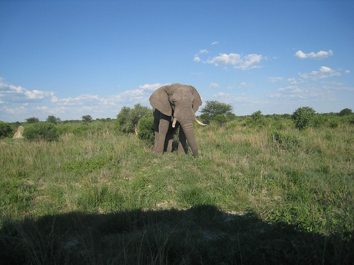 an elephant by the highway
