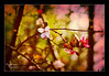 a glimmer (Katie Shearer) Tags: landscape spring betharmsheimertexture