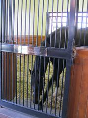 After Market (first_dude) Tags: kentucky horseracing stallion thoroughbred aftermarket lanesend lanesendfarm