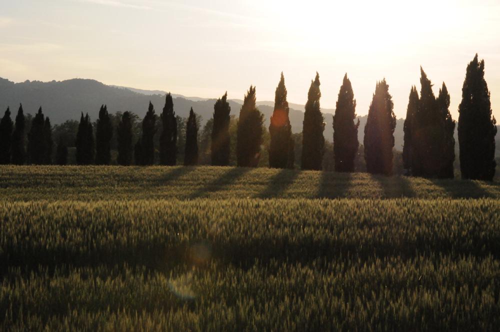 Abbazia di San Galgano, Tuscany