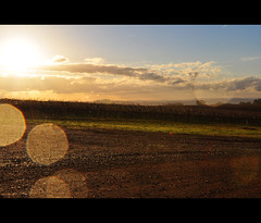 Vineyard Sunburst (Cynthia Brown Images) Tags: sky green clouds outdoors countryside nikon wine country australia victoria hills sunburst 365 wineyard reddirt d90 mblue brownbrothers wideanglelense banksdale 1735mmf24