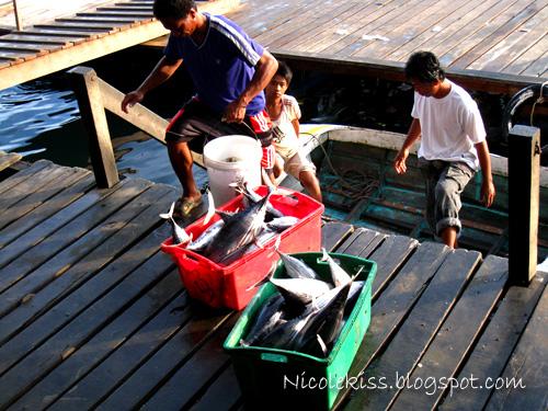 tuna fish from fishermen