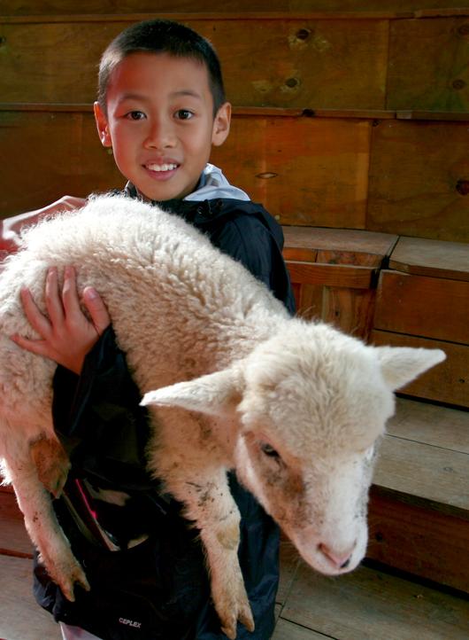 Arthur & the lamb