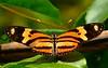 Borboleta (Pedro Cavalcante) Tags: butterfly fuji papillon borboleta finepix fujifilm mariposa farfalla sommerfugl schmetterling vlinder 蝴蝶 naturesfinest бабочка チョウ 6500 s6500 s6500fd impressedbeauty finepixs6500 theunforgettablepictures finepix6500 goldstaraward pedrocavalcante