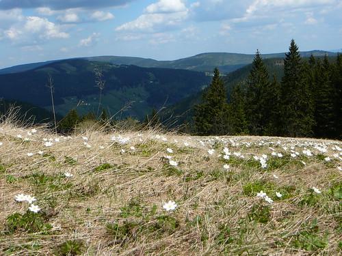 Riesengebirge 2008 (79)