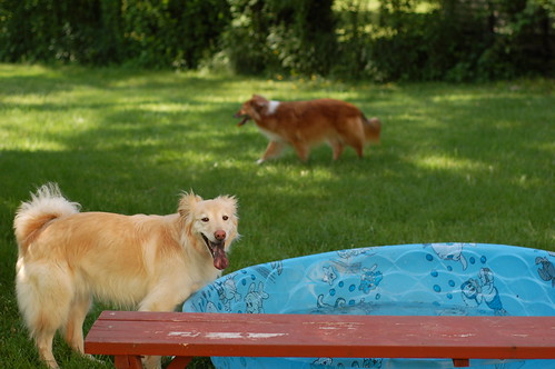 time for the doggie pool